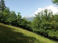 Zielone wzgórza, pagórki